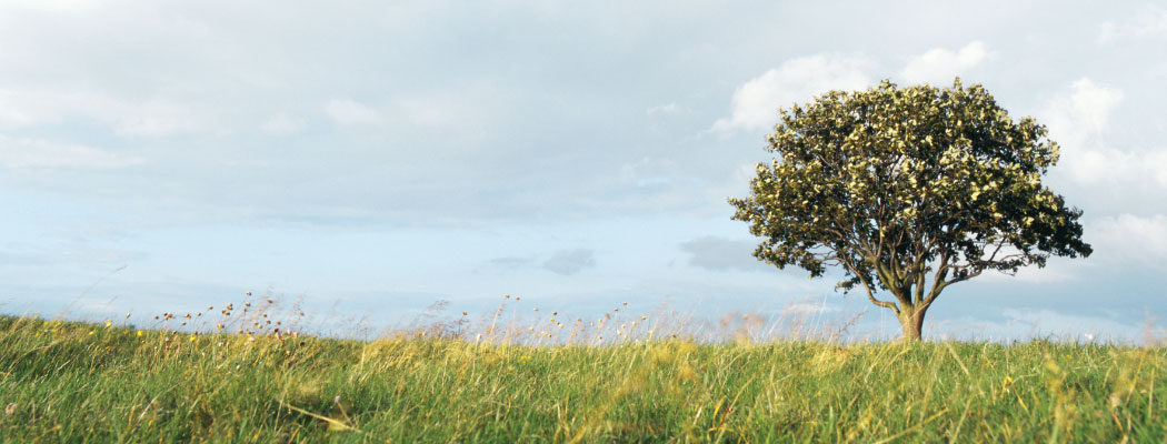 tree-bknd